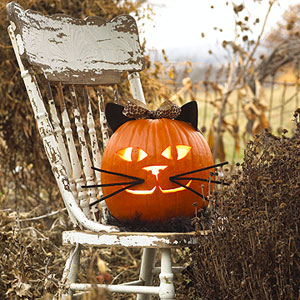 cat_pumpkin.jpg